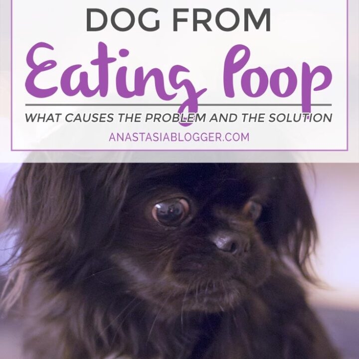 How to stop dog from eating poop