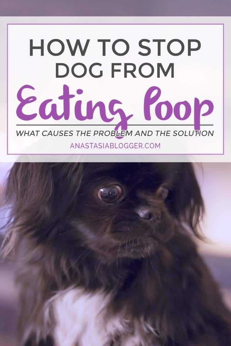 When Do Dogs Stop Eating Puppy Food