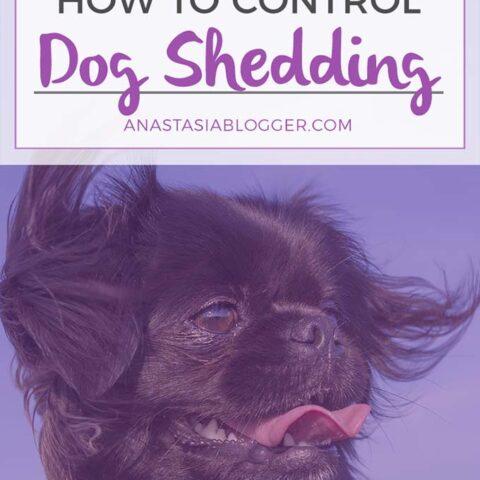 How long does dog shedding last?
