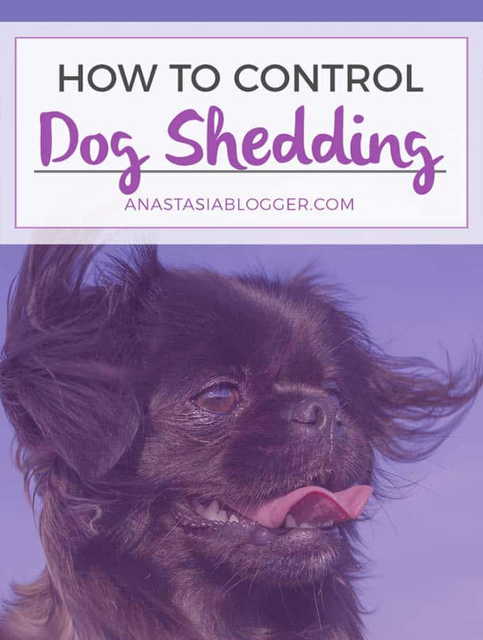 How long does dog shedding last?