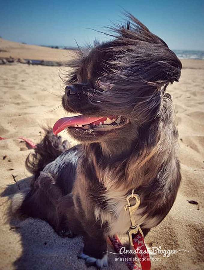 Yoshi on a windy beach in Porto