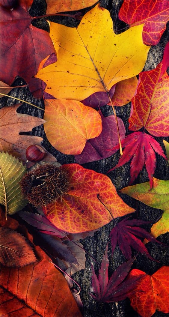 Fall Iphone Wallpapers 30 Cute Fall Iphone Background Ideas For Free Download