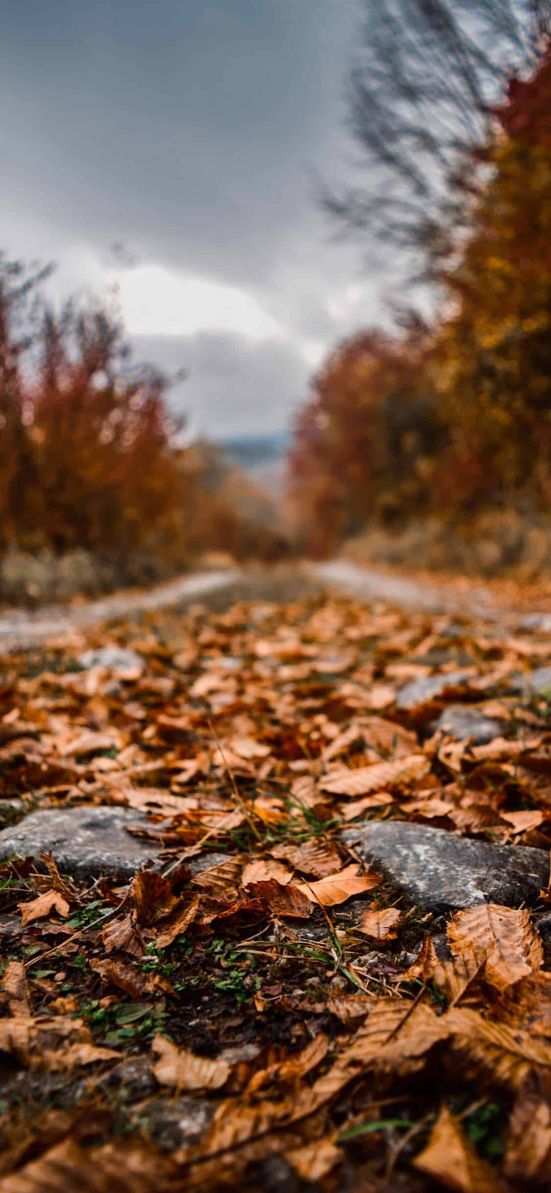 foto de Fall Wallpapers for iPhone - FREE Download Best Autumn Wallpapers